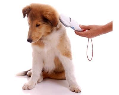 Hund wird mit rfid-Lesegerät gescannt