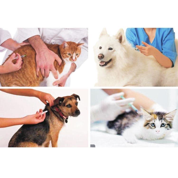 Implantieren eines RFID-Chips unter die Haut von Haustieren wie Katzen und Hunden