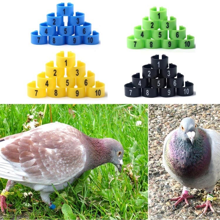 RFID Bein-Tag für Vögel oben, RFID Bein-Tag für Taube unten